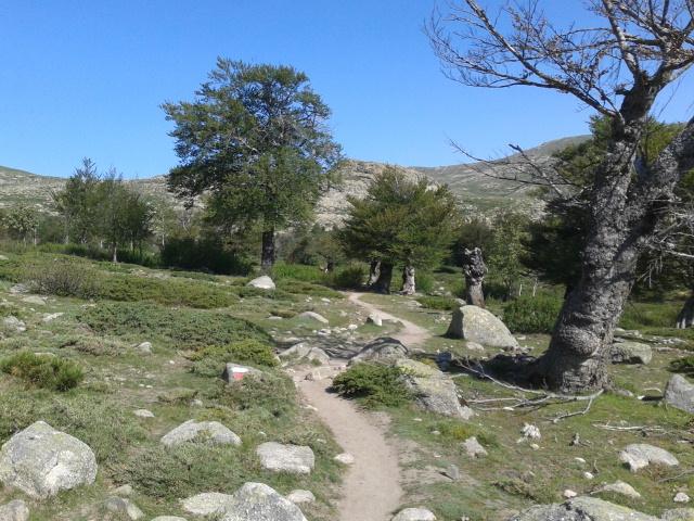 Beech Tree towards le Taviganu-27-6-13